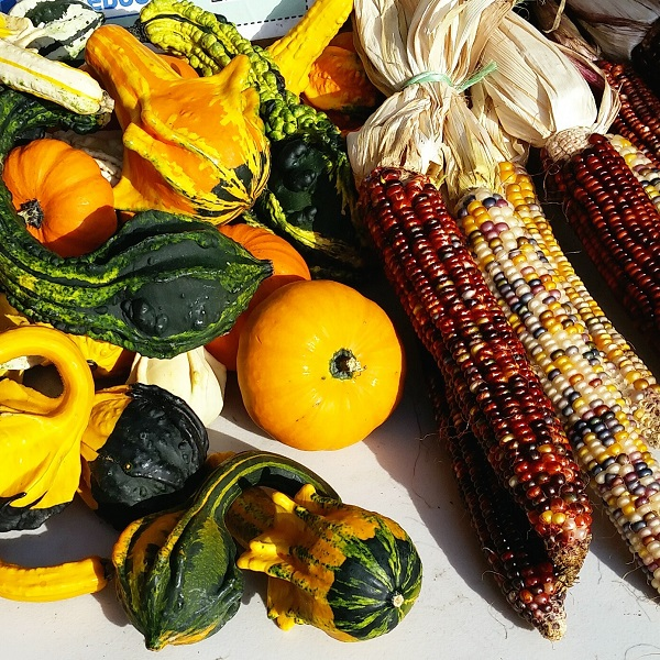 Gourds and corn for fall