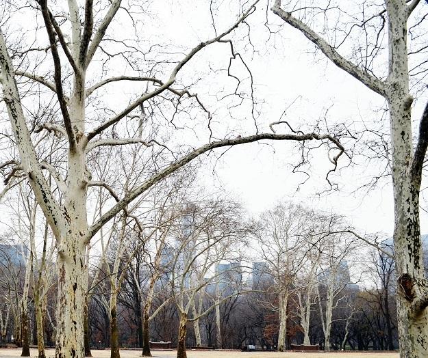 central park8