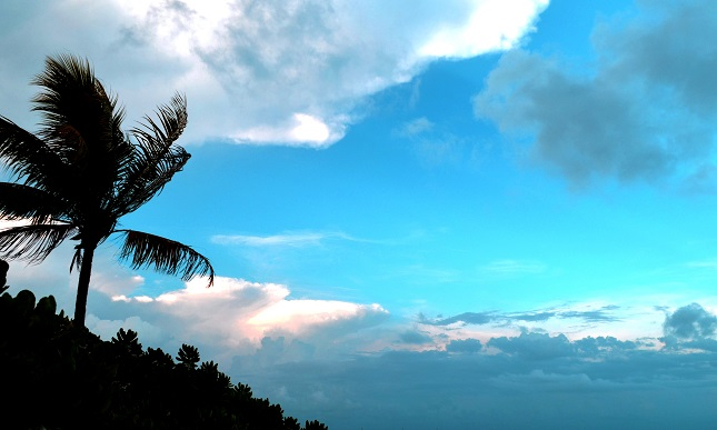kw saturday palm clouds